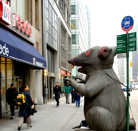 The National Labor Relations Board (NLRB) ruled on Thursday that labor unions should have the right to display 16-foot, rat-shaped balloons outside businesses with which they disagree.